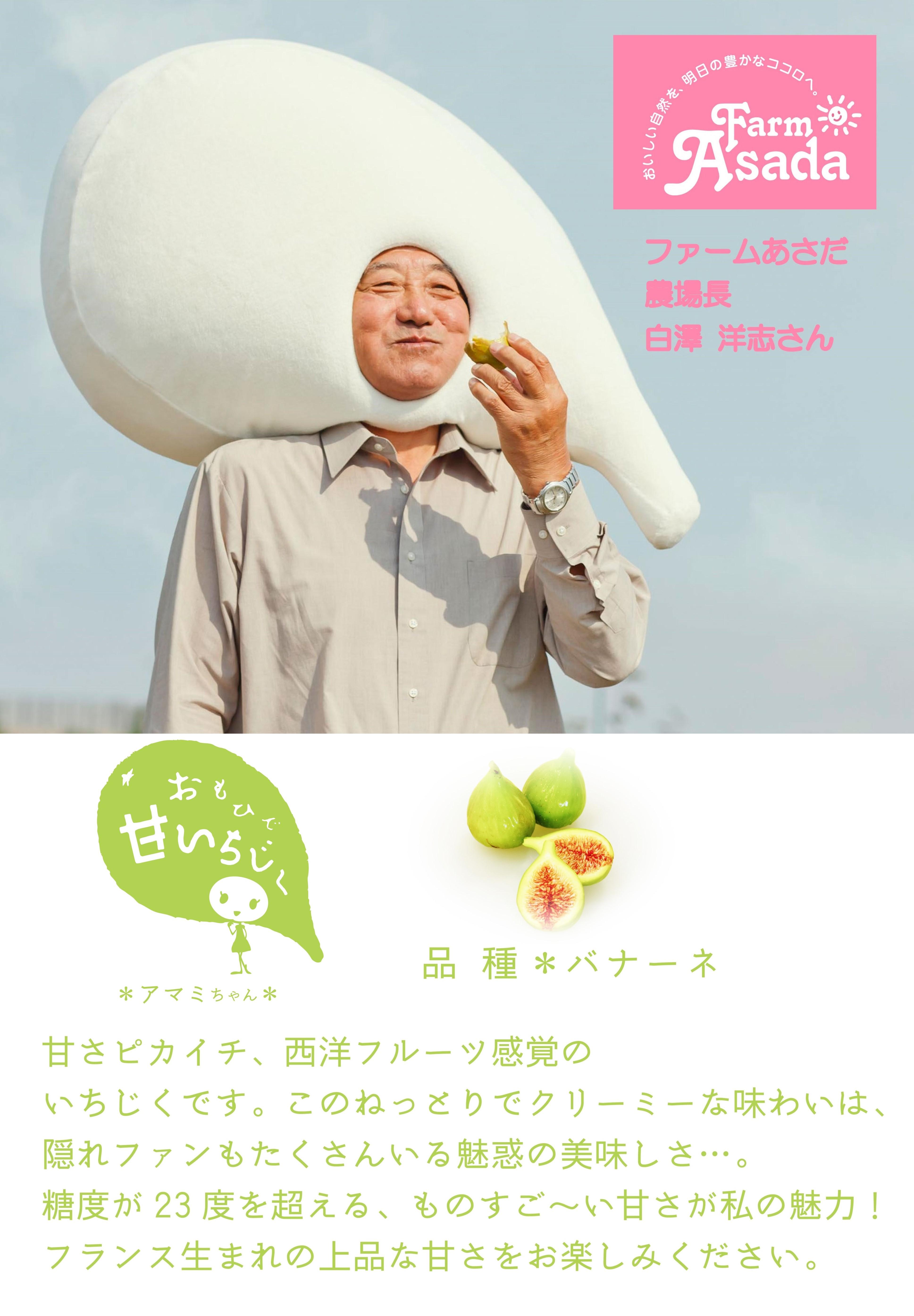 いちじくあさだPOP-A42